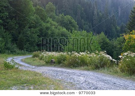 Widding Country Road Through Relict Forest