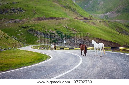 White And Brown Horses Walking