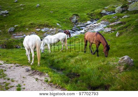White And Brown Horses Feeding