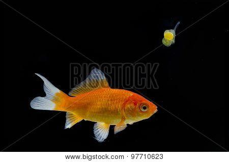 larvae and fish