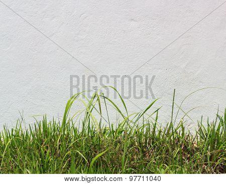 Fresh Green Grass Against White Stucco Wall