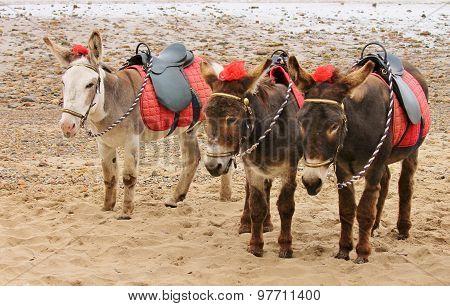 Donkey's On A Beach At A U.K. Holiday Resort