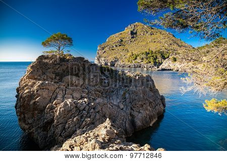 Lonely Pine Growing On A Rocky Hill Near Sa Calobra
