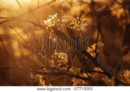 Autumn sunset plant