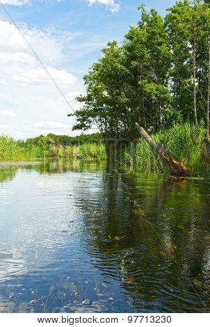 Poland.brda River In Summer.vertical View