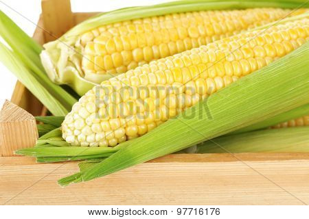 Fresh corn on cobs in wooden crate, closeup
