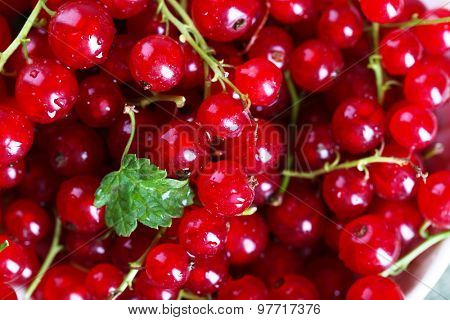 Heap of fresh red currants close up