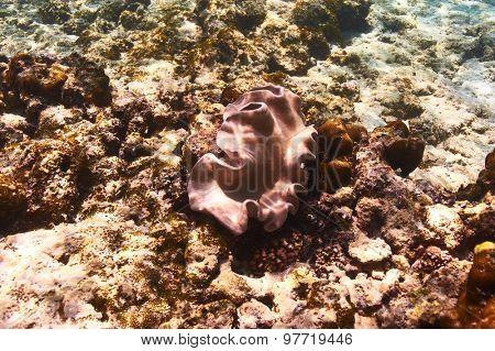 Coral reef close up at Seychelles