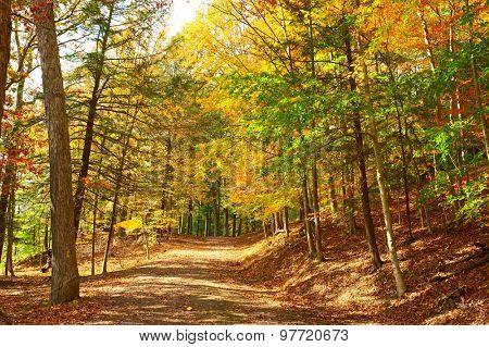 Autumn scene landscape at Letchworth State Park