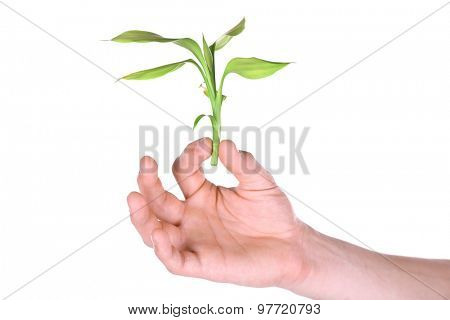 Male hand with green plant isolated on white