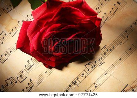 Beautiful red rose on music sheets, closeup