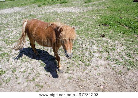 Outdoors Pony Horse