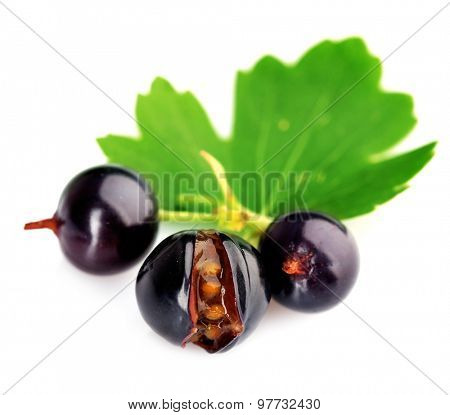 Fresh black currant isolated on white