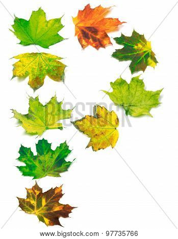 Letter P Composed Of Multicolor Maple Leafs