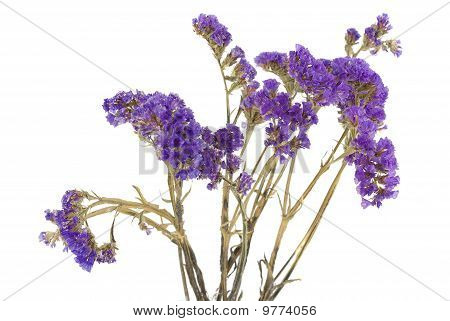 Dried Purple Flowers On The White.