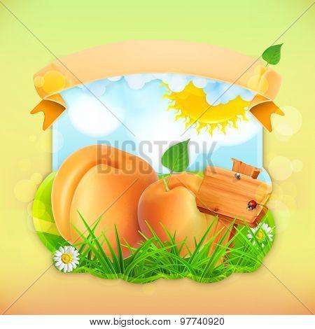 Fresh fruit label apricot, vector illustration background for making design of a juice pack, jam jar etc