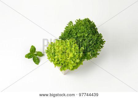 box of lettuce on white background