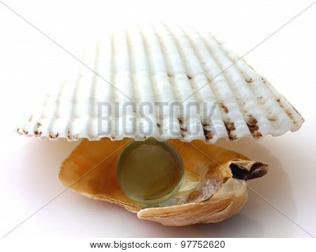 Shells with pearl isolated on white