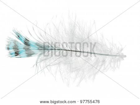 single striped feather isolated on white background