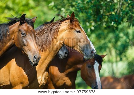 Herd Of Horse On The Meadow