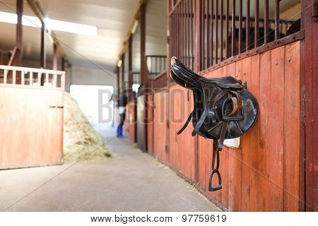 Leather Saddles Horse