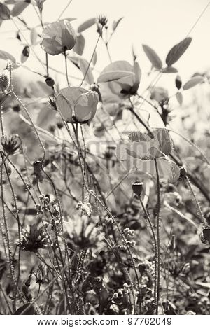 Poppies And Other Wild Flowers On A Green Field In Spring. In Black And White Toned. Retro Style