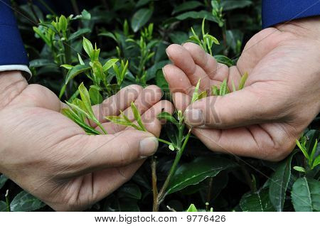 Hand and Tea