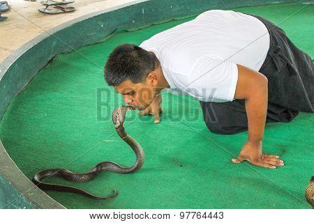 Kissing Cobra