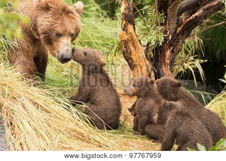 Four Bear Cubs Greet Mother Beside Tree