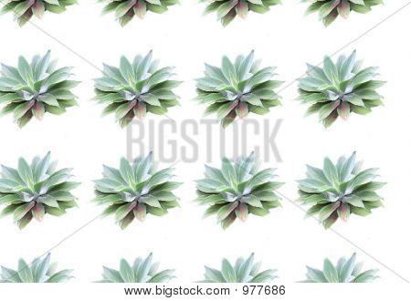 Plant Reworked