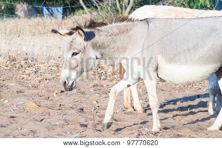 Donkey Sun Sand