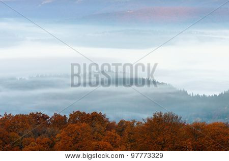 Autumn landscape with fog in the mountains. Beech forest with orange leaves
