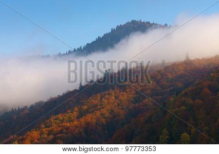 Autumn beech forest. Cloud on the hillside
