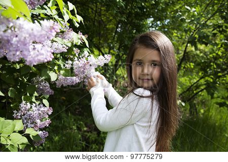 cute little brunette girl holds a blossoming branch of lilac