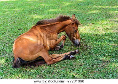 Broken Leg Horse Eating Grass In A Farm
