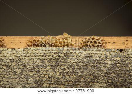 honeycomb full of beeswax