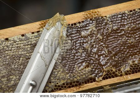 beekeeper removed beeswax