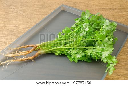 Fresh Green Chinese Parsley Or Coriander A Tray