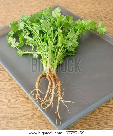 Chinese Parsley Or Coriander On A Grey Tray