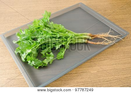 Chinese Parsley Or Coriander On A Tray