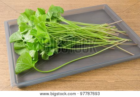 Fresh Gotu Kola Plant On A Tray