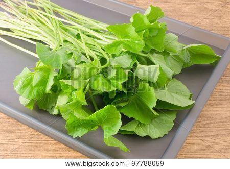 Centella Asiatica Or Gotu Kola Plant On A Tray