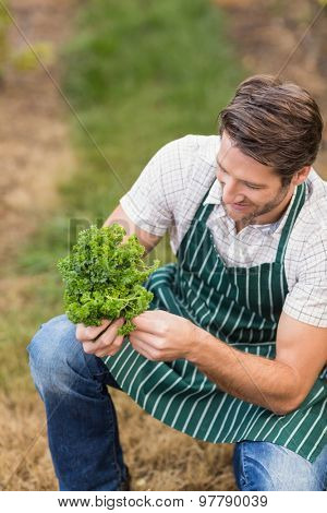 Young happy farmer looking at vegetable in the field