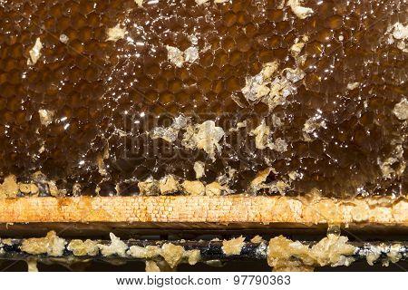 honeycomb full of honey