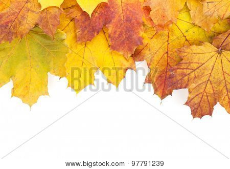 Colorful autumn maple leaves frame. Isolated on white background