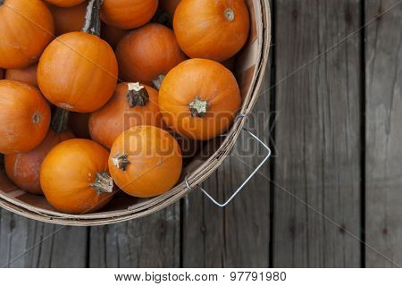 Autumn harvest with baby pumpkins