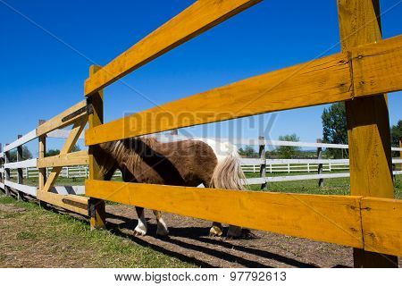 Ranch Horses In Fence