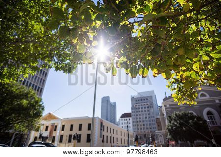 Sun shining over a city framed by green leaves