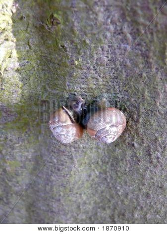 Snail Mating