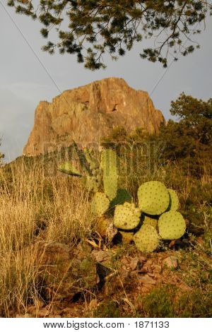 Emory Peak With Prickly Pear